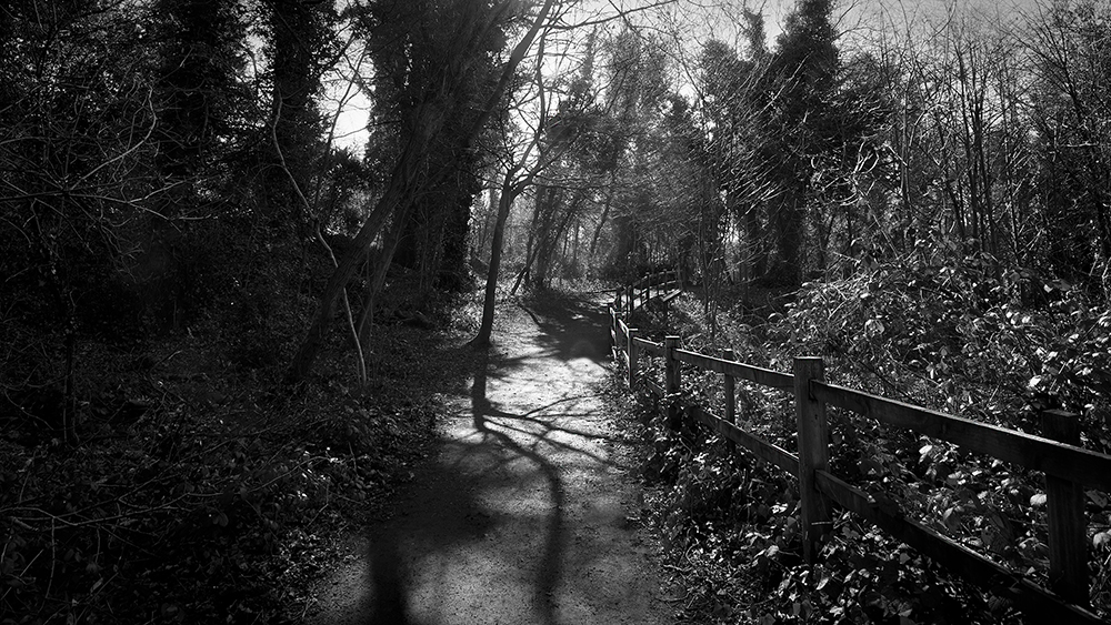 Saltwells Local Nature Reserve in  Black and White IV.