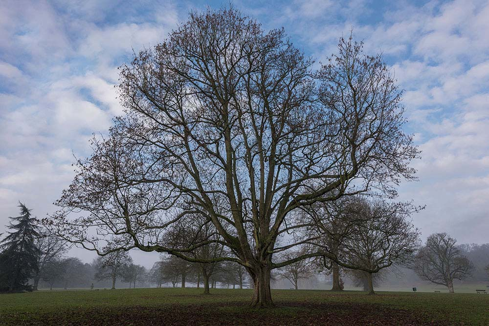 Himley Hall Park Winter Walk #2.