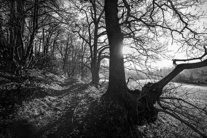 Autumnal Light and colour Ridge Hill Woods in Black and White.