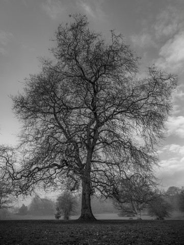Himley Hall park in Black And White.