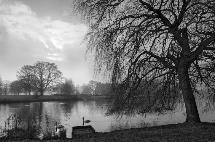 Himley Hall Park Winter Walk #4.