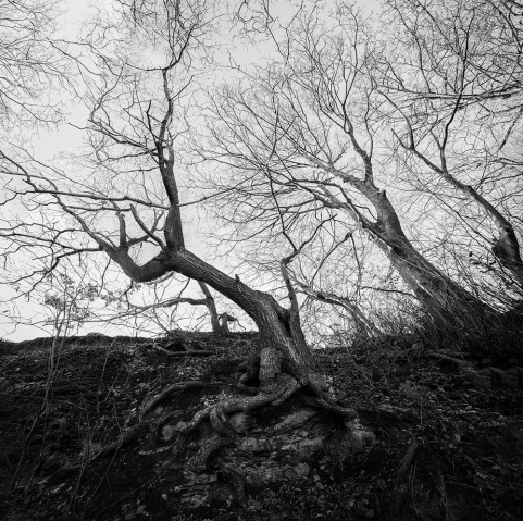 Trees and Roots in Black and White.