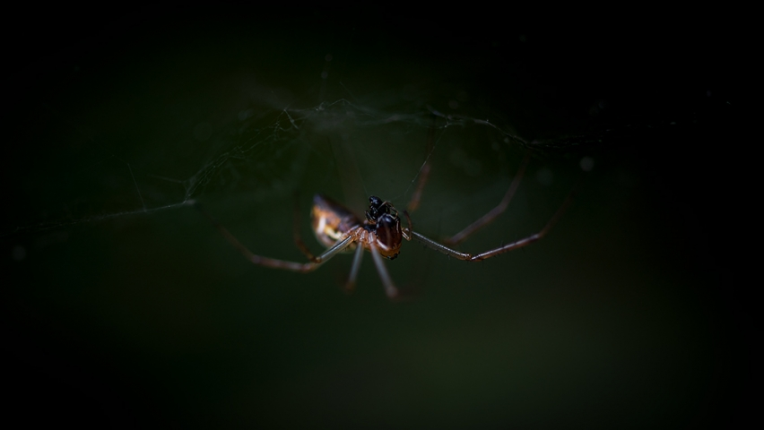 Spider eating an ant.