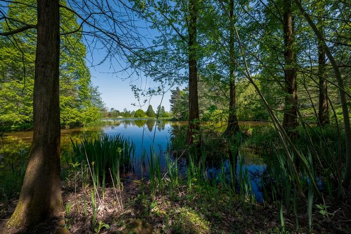 Bodenham Arboretum III.