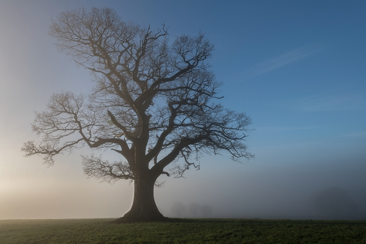 The mighty oak..
