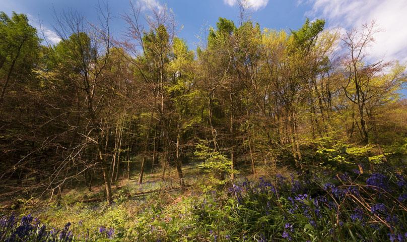 The Woods Clent Hills III.