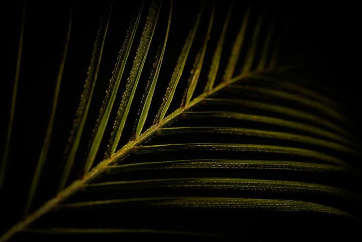 Leaf Blade Macro.