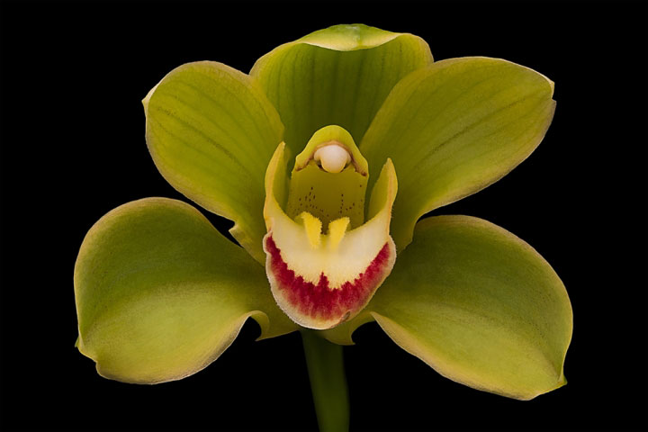 Orchidaceae Macro