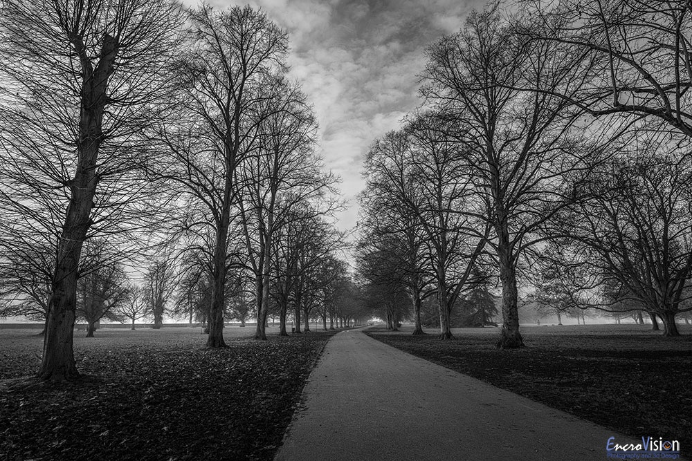 Himley Hall Park Winter Walk.