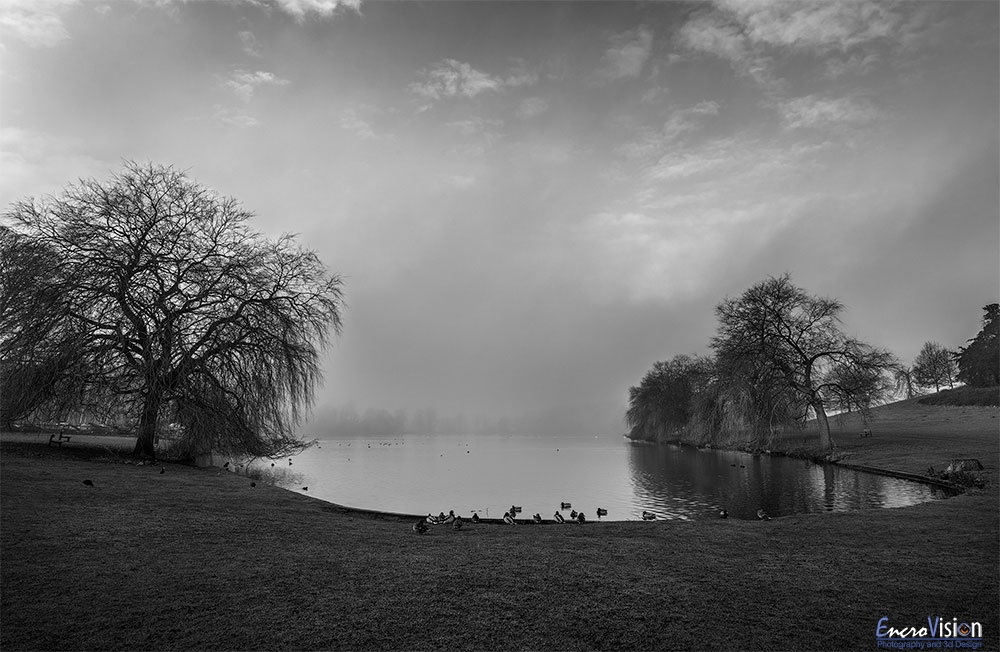 Himley Hall park in Black And White #2.