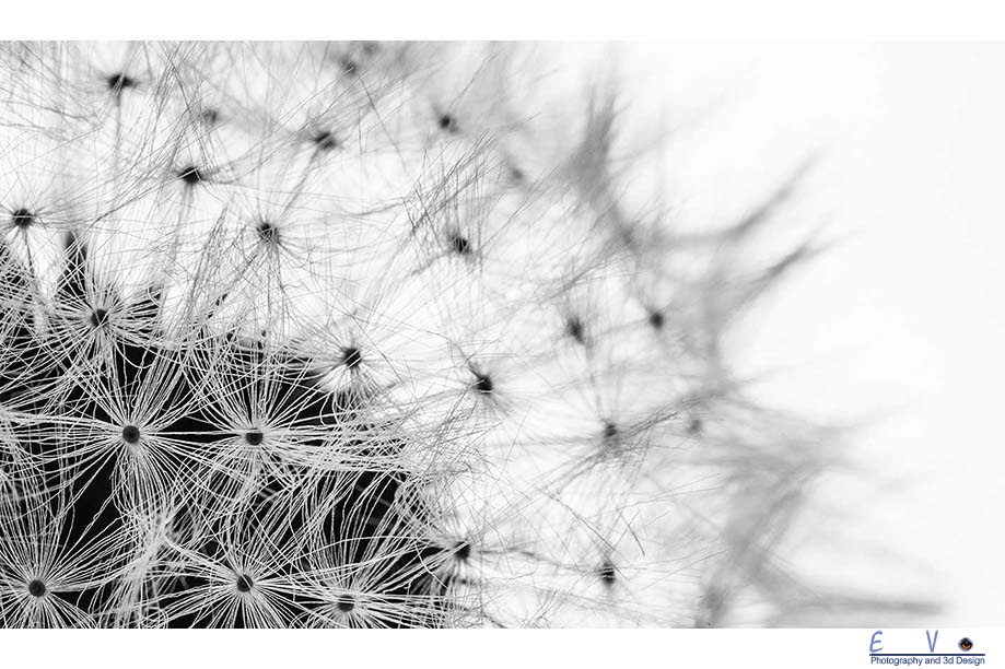 The Dandelion Clock Macro