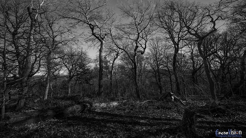 Saltwells Local Nature Reserve in  Black and White.