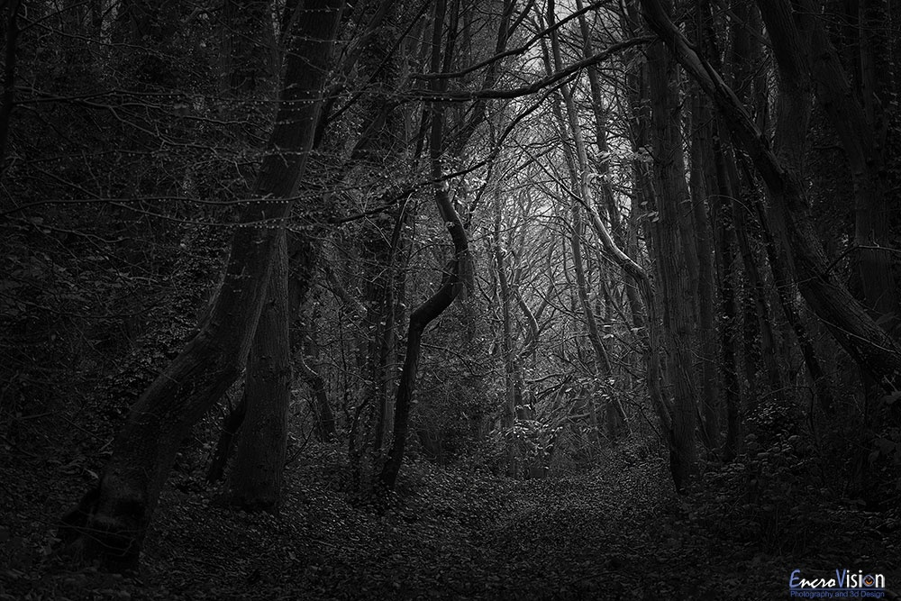 Kali Woods Autumn Black & White.