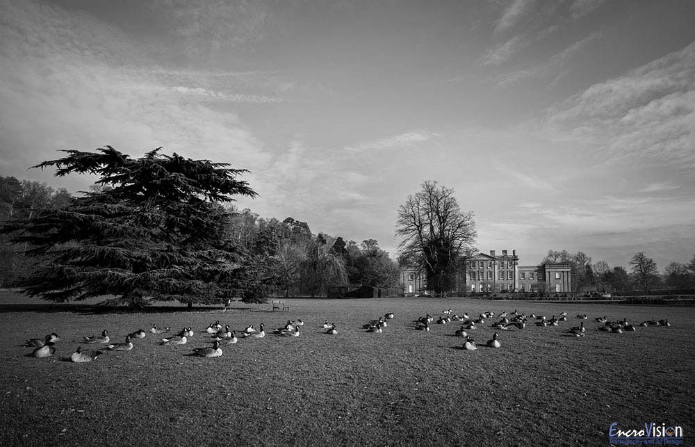 Himley Hall park in Black And White #3._1
