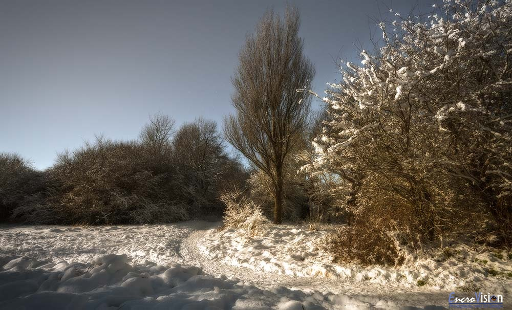 Charm and snowfall, Foot's Hole nature reserve.